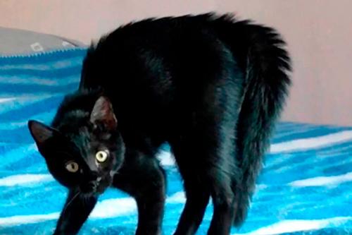 Basetis Cats - Foto de la gata Biki