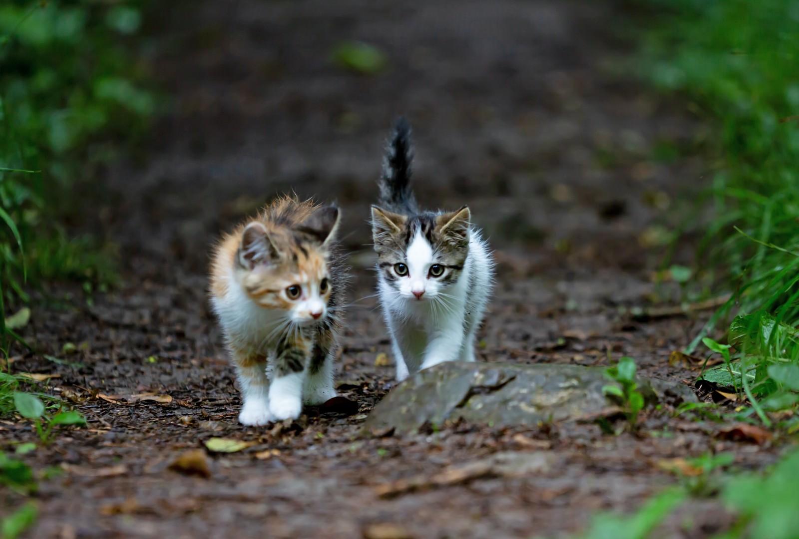 Dos gats al bosc
