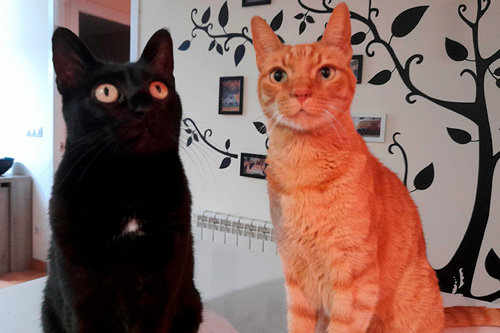 Basetis Cats - Foto dels gats Gaia i Angus