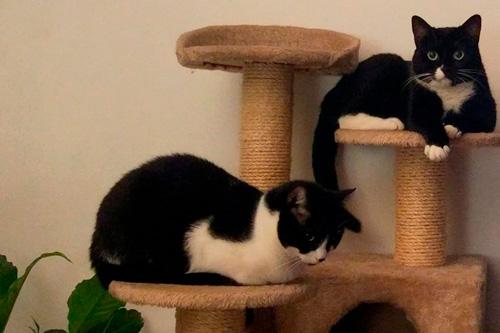 Basetis Cats - Foto de la Gata Christie i Boomer