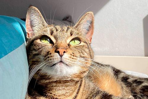 Basetis Cats - Foto de la gata Lucy