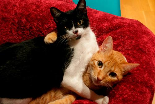 Basetis Cats - Foto de les gates Rita i Txispa