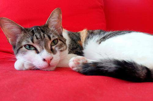 Basetis Cats - Foto de la gata Rita