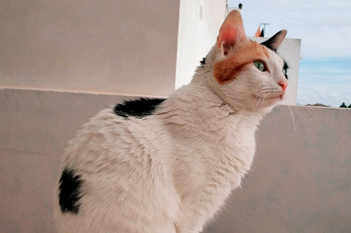 Basetis Cats - Foto de la gata Saha
