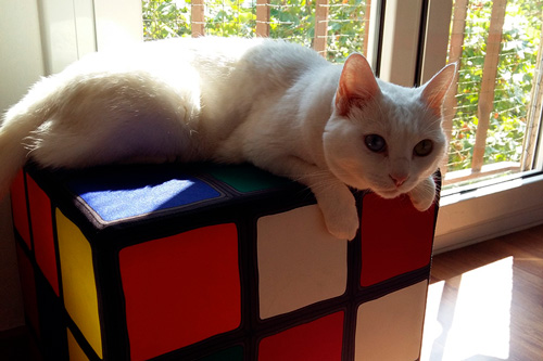 Basetis Cats - Foto de la gata Tomasa