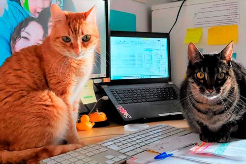 Basetis Cats - Foto dels gats Yoko i Bruce