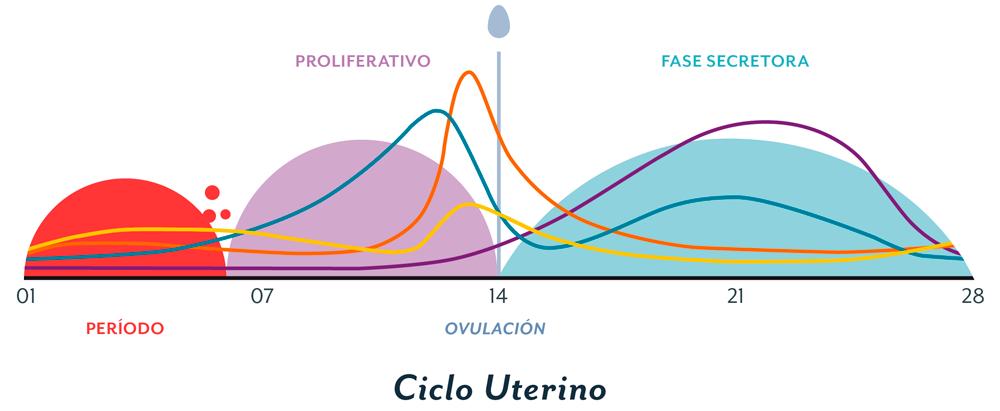Gràfic sobre el cicle menstrual